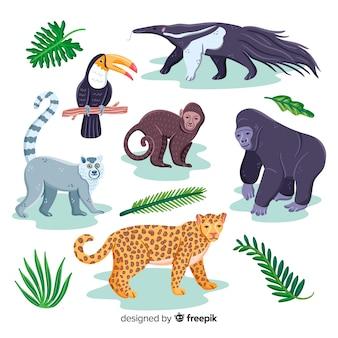 Mão desenhada coleção animal exótica