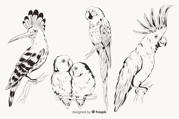 Mão desenhada coleção de aves exóticas