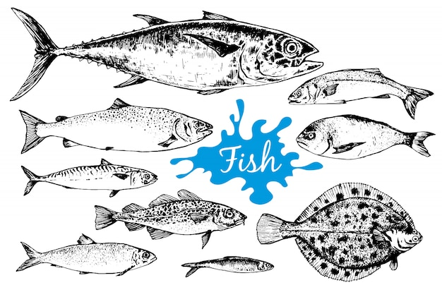 Mão desenhada coleção de frutos do mar com peixes