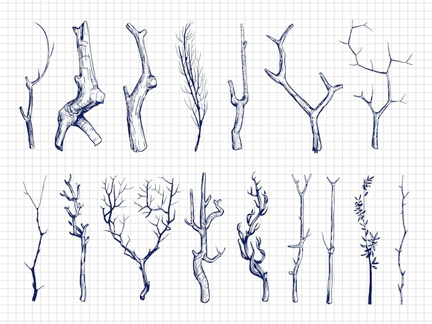 Mão desenhada coleção de galhos de madeira