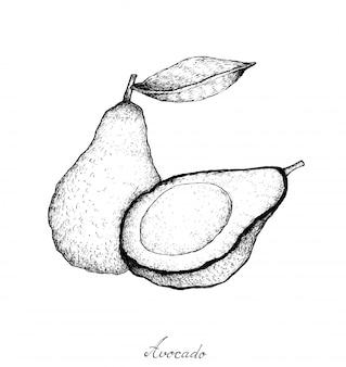 Mão desenhada de abacates verdes frescos no fundo branco