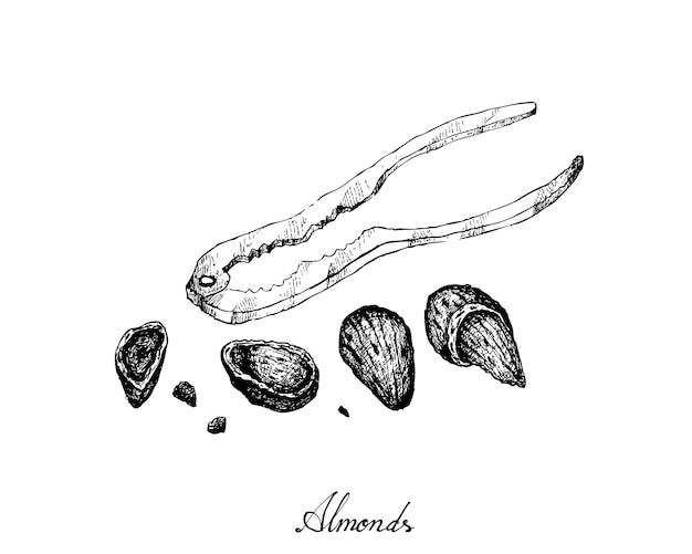 Mão desenhada de amêndoas com um quebra-nozes