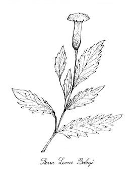 Mão desenhada de beterraba, serra leoa bologi e espinafre