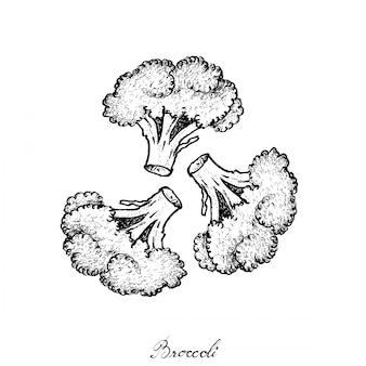 Mão desenhada de brócolis cru fresco