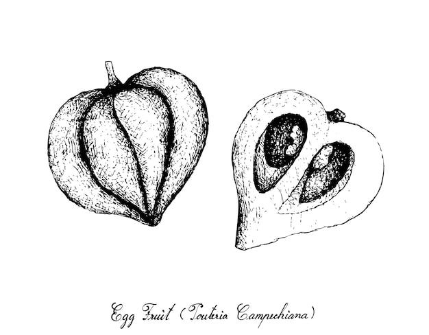 Mão desenhada de canistel ou eggfruit