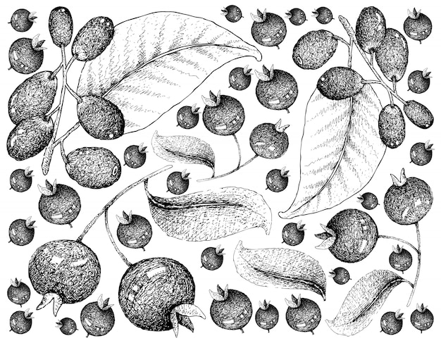 Mão desenhada de cerejas grumichama e jambolan ou jamun fundo