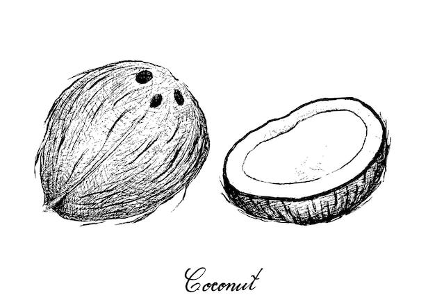 Mão desenhada de coco frutas no fundo branco