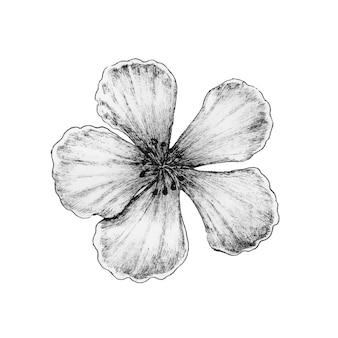 Mão desenhada de flor de sakura