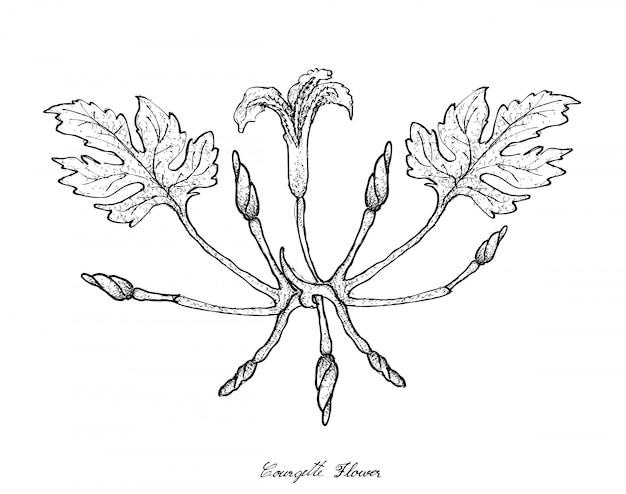 Mão desenhada de flores de courgette