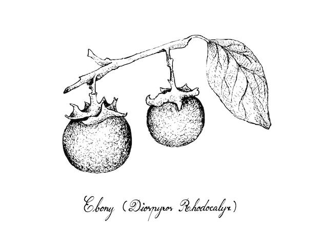 Mão desenhada de frutas de ébano