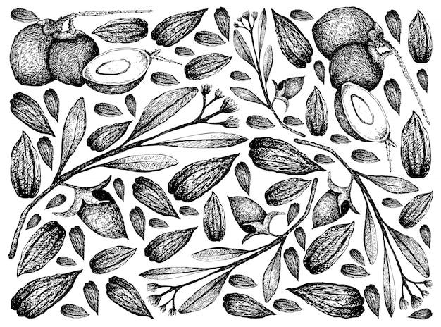 Mão desenhada de fundo de frutas de coco e nozes de jojoba