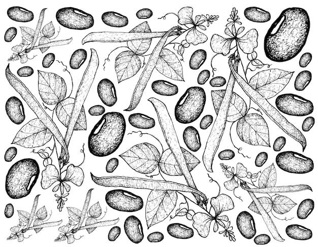 Mão desenhada de fundo de plantas de feijão de corredor