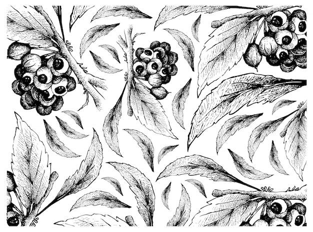 Mão desenhada de guaraná ou paullinia cupana frutas fundo