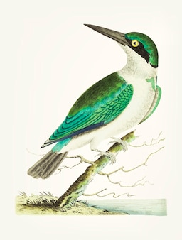 Mão desenhada de kingfisher de cabeça verde