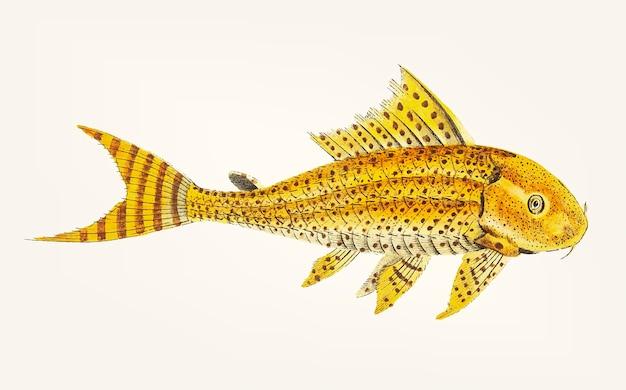 Mão desenhada de loricaria amarela
