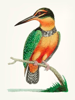 Mão desenhada de martim-pescador