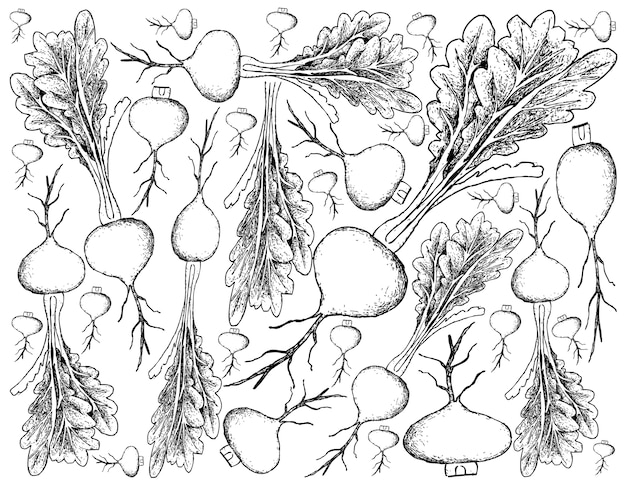 Mão desenhada de nabo de pradaria no fundo branco