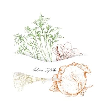 Mão desenhada de outono legumes, aipo e repolho