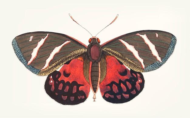 Mão desenhada de papilio icarus