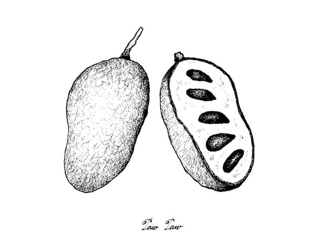 Mão desenhada de pata de pata fresca