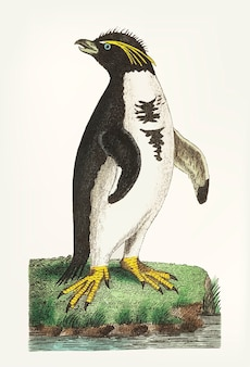 Mão desenhada de pinguim-de-crista