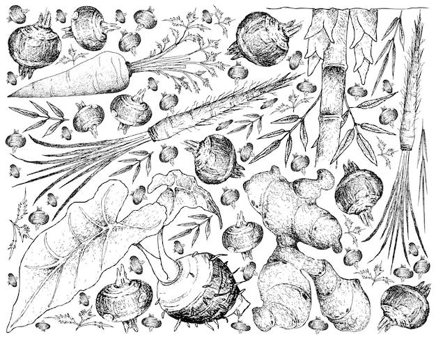 Mão desenhada de raiz e legumes tuberosos fundo