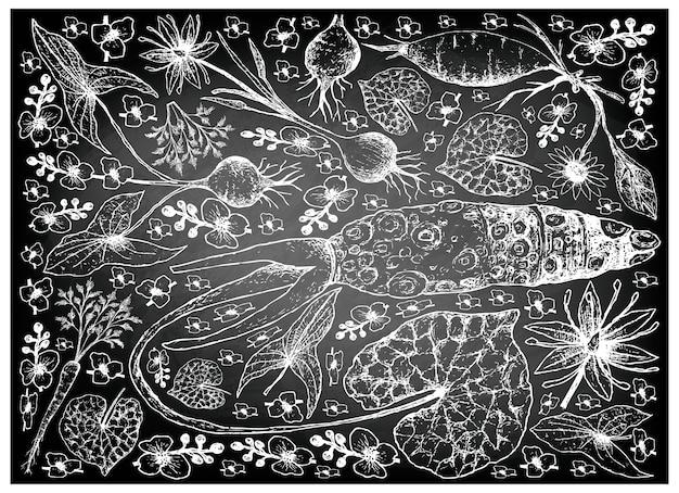 Mão desenhada de raiz e tuberosa legumes na lousa