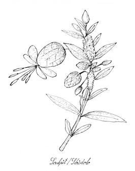 Mão desenhada de sculpit ou stridolo no fundo branco