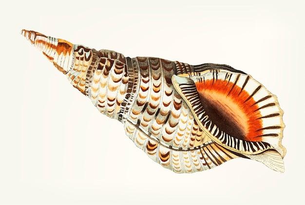 Mão desenhada de trompete de mar