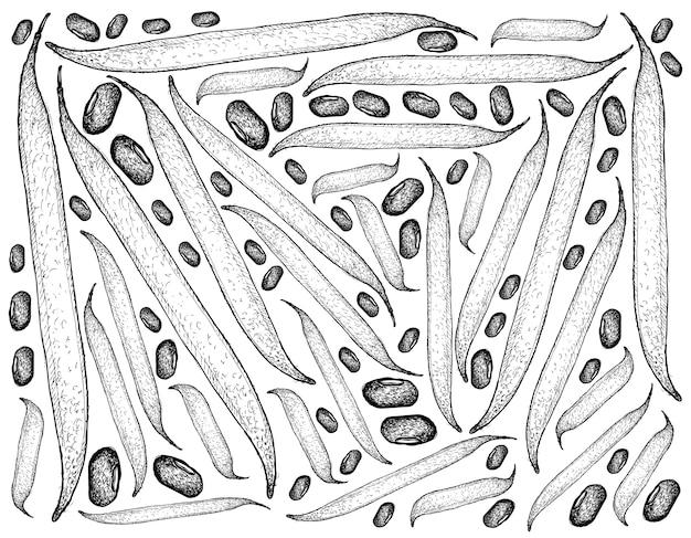 Mão desenhada de vagem ricebean e fundo de grãos