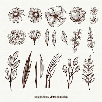Mão desenhada elementos florais com estilo esboçado