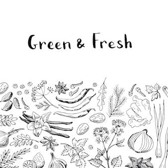 Mão desenhada ervas e especiarias
