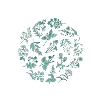 Mão desenhada ervas medicinais em forma de círculo