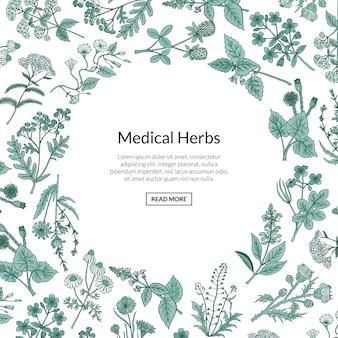 Mão desenhada ervas medicinais