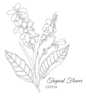 Mão desenhada flores tropicais