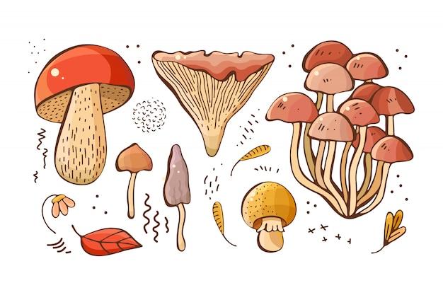 Mão desenhada floresta cogumelos, sementes e plantas em um fundo branco