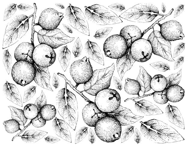 Mão desenhada fundo de goiabas de limão
