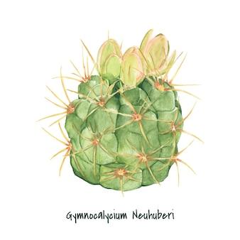 Mão desenhada gymnocalycium neuhuberi cactus