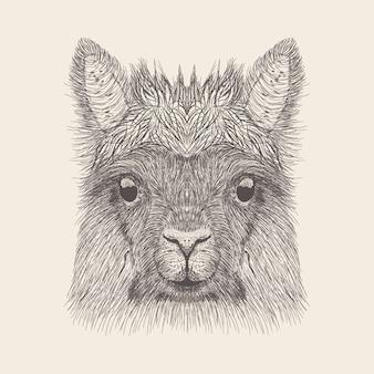Mão desenhada hiena ilustração vector