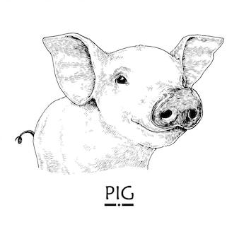Mão desenhada ilustração de porco