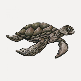 Mão desenhada ilustração de tartaruga marinha