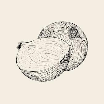 Mão desenhada ilustração vetorial de cebola