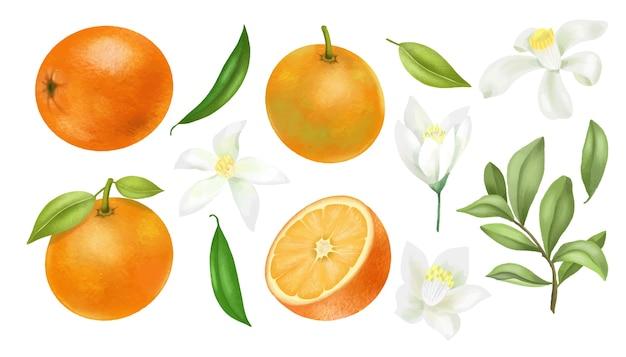 Mão desenhada laranjas galhos de árvores, folhas e clipart de flores de laranja, isolado em um fundo branco