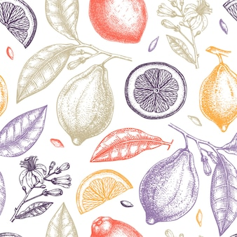 Mão desenhada padrão de frutas cítricas.