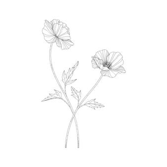 Mão desenhada papoula ilustração floral