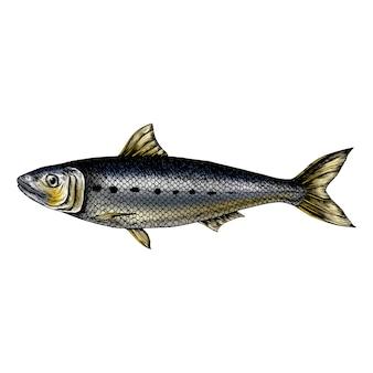Mão desenhada peixe sardinha