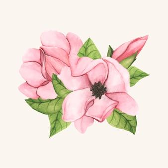Mão desenhada pires flor de magnólia isolada