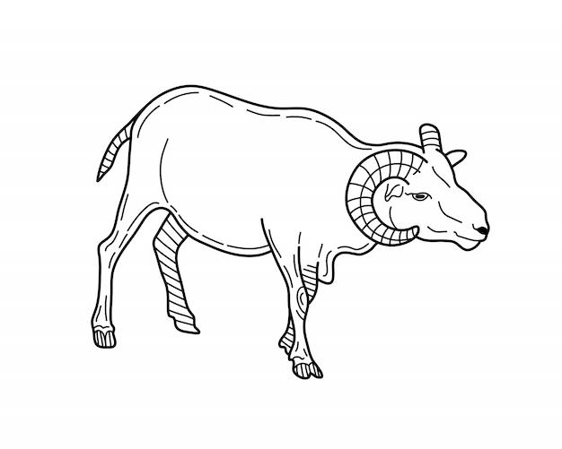 Mão desenhada ram. desenho ilustração vetorial.