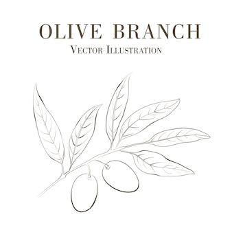 Mão desenhada ramo de oliveira.