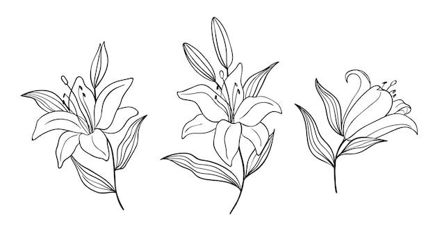 Mão desenhada ramos com lírio isolado no fundo em estilo linear